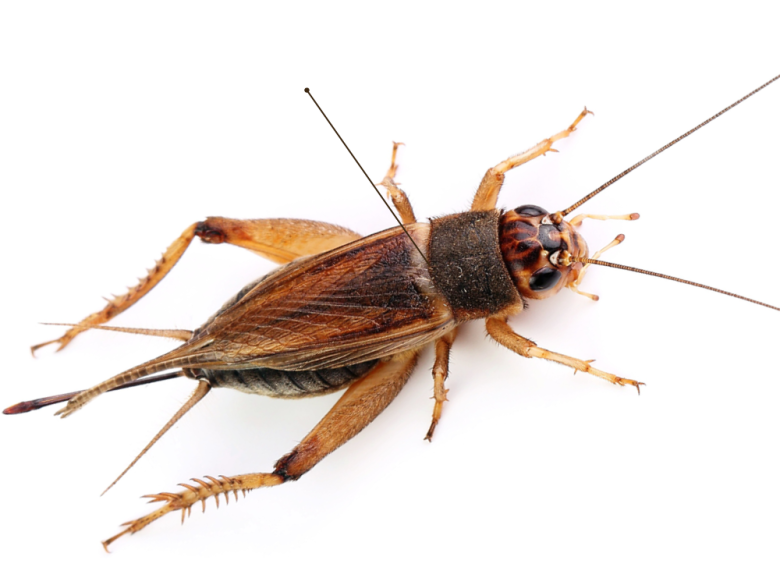 افضل شركة مكافحة حشرات بابها